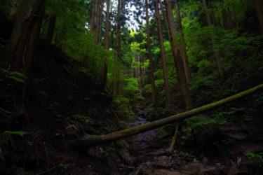 金剛山 ツツジオ谷登山ルート 自然を感じれるコース!